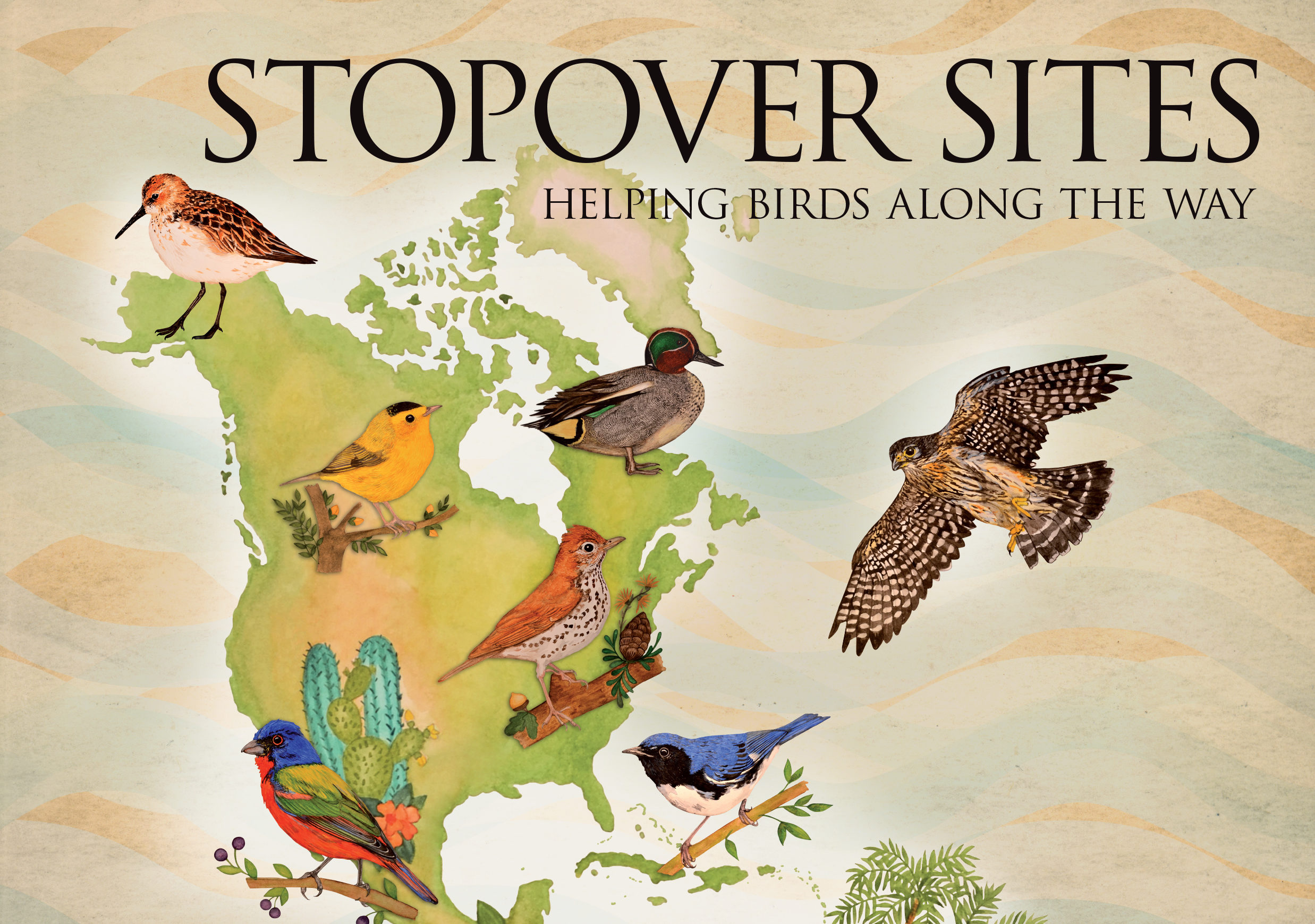 News Release: International Migratory Bird Day to Educate Participants on the Importance of Healthy Stopover Sites