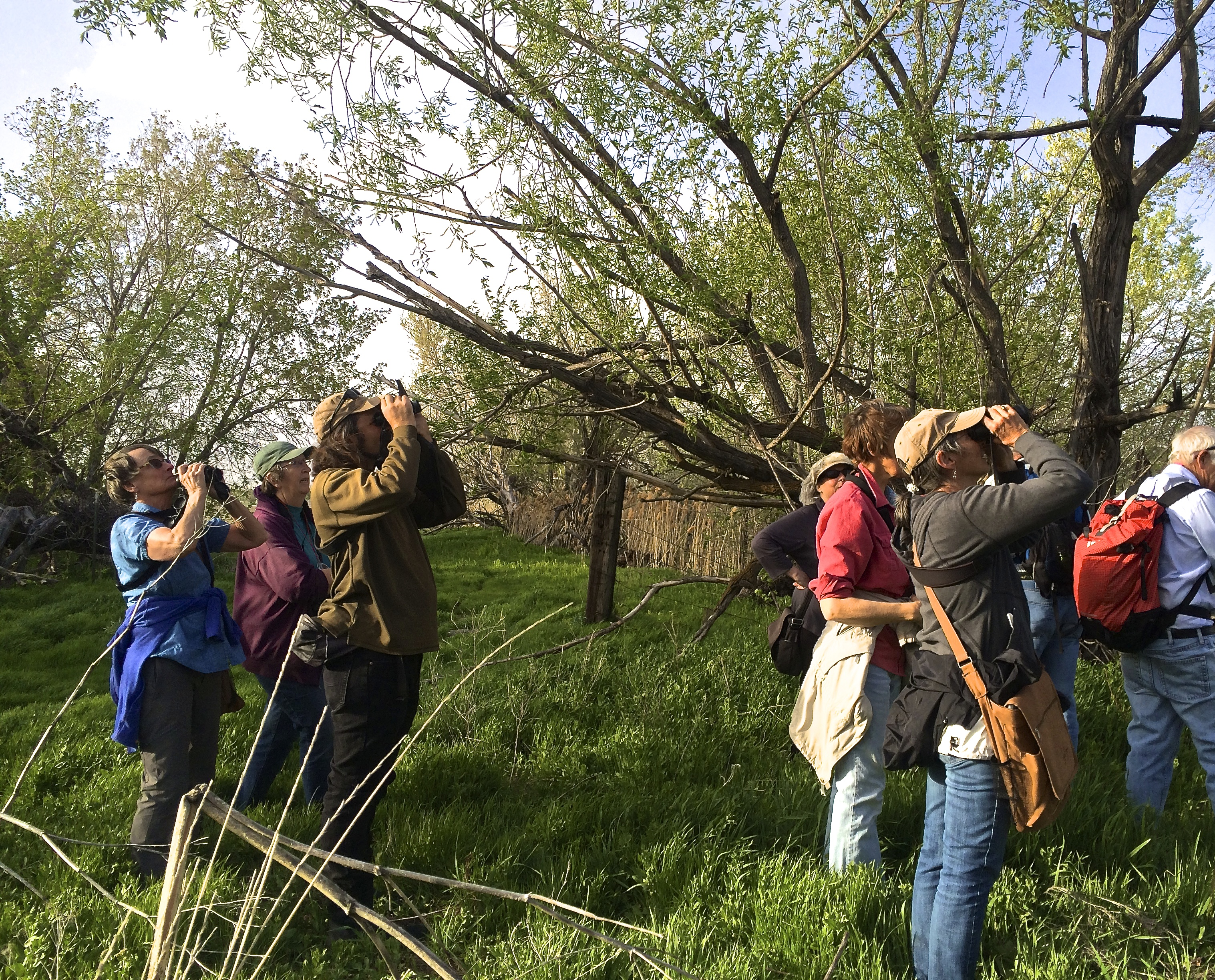 Citizen Scientists at Tracy Aviary Spot Spring Migrants