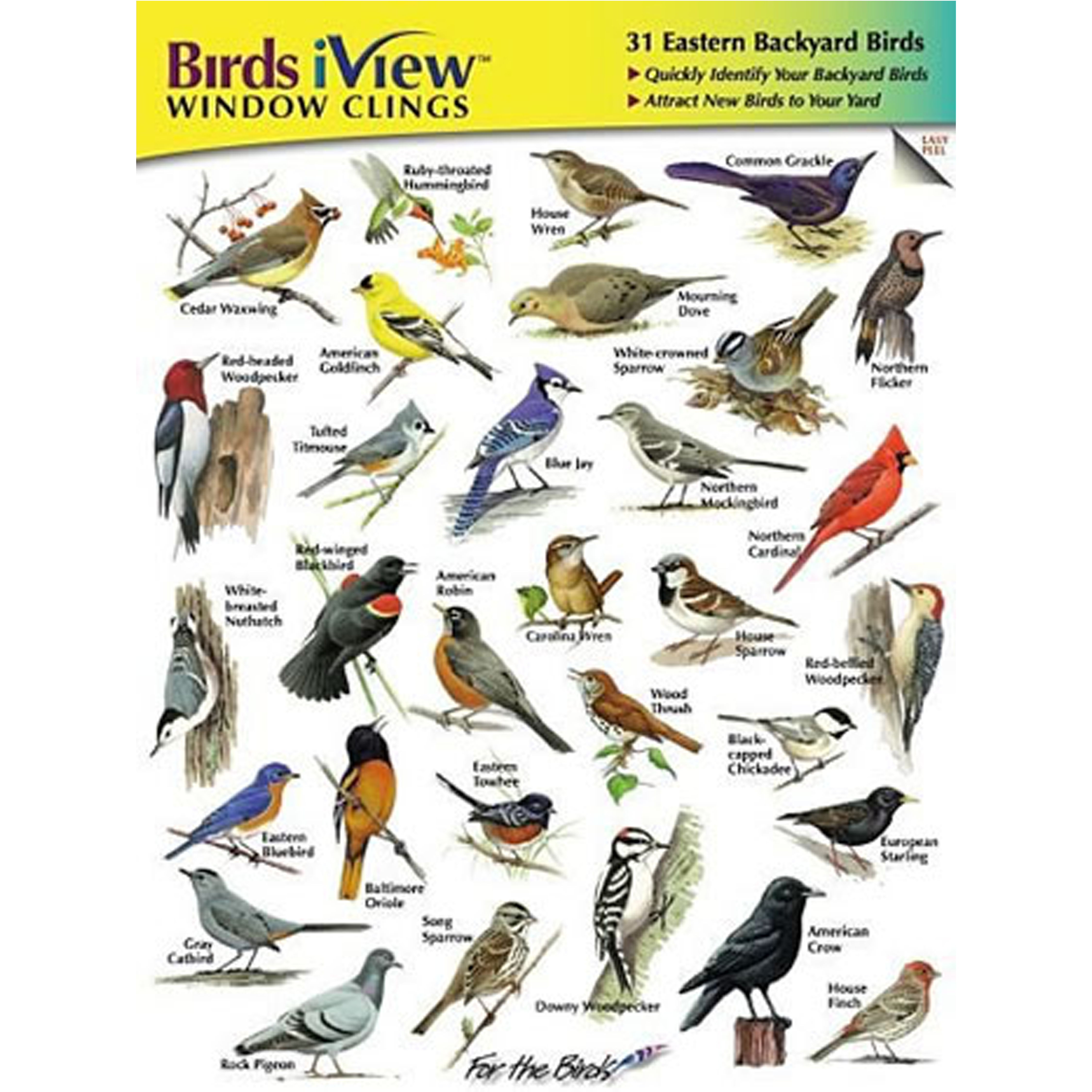 Common Backyard Birds birds iview window clings – environment for the americas