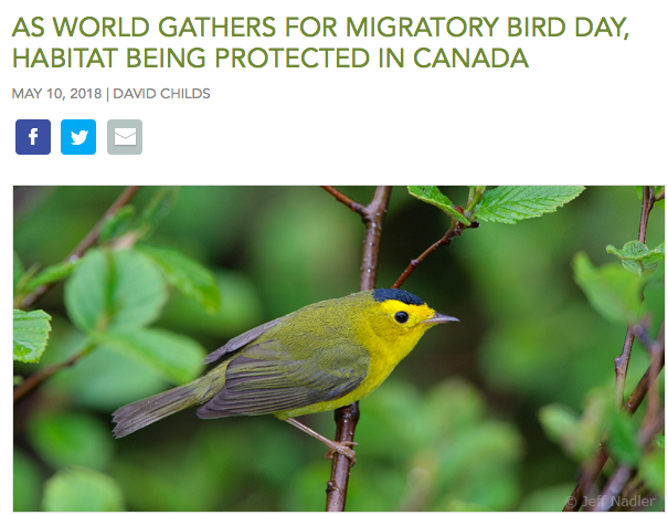 World Migratory Bird Day as Canada Protects Habitat