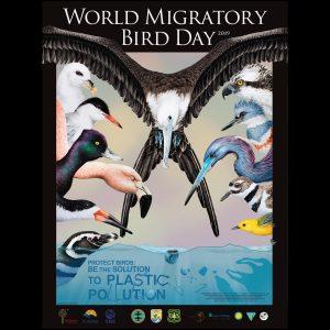 World Migratory Bird Day 2019